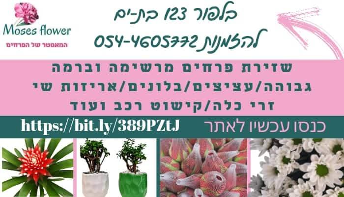 פרחים מוזס
